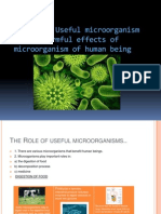 The Role of Useful Microorganism and Harmful Effects