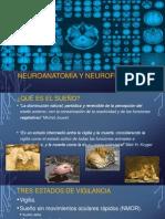 Neuroanatomía y Neurofisiología Del Sueño