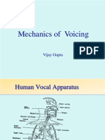 Vocal Cords and Voicing