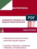 histologie-lp8_hematopoieza