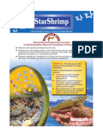 Star Shrimp