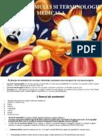 Prez Introducere in Anatomie Si Term Sept 2010 Curs 1 Bun