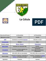 Celula y Partes Obst1