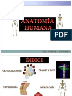 Anatomía. Dra. Johana Espinoza
