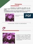 Clase 7 Histograma Dilatacion de Imagenes