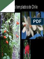 Bosques Templados de Chile.pdf