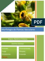 Aula - Morfologia Vegetal