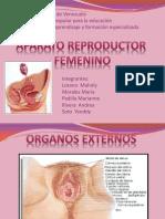 (Fisiología) Sistema Reproductor Femenino