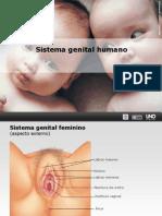 Reproducao Humana - Prof. Leandro