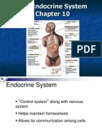 A&P Endocrine Chap 10