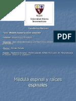 Medula Espinal263