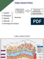 Aula Sistema Digestorio
