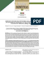 REPRODUCCIÓN DEL HALCÓN PLOMIZO (Falco femoralis femoralis) EN LAS PAMPAS DE ARGENTINA Y SU PECULIAR ASOCIACIÓN A COLONIAS DE CHIMANGO (Milvago chimango)