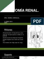 Clase Anatomía Renal