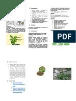 El Llanten Enciclopedia