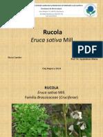 Prezentare RUCOLA
