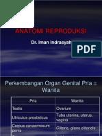 Anatomi Reproduksi Pria Wanita