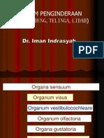 Anatomi Sistem Indra