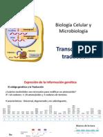 Expresion Genica y Sintesis de Proteinas (1)