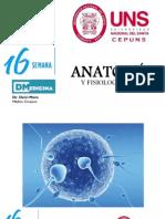 Dmedicina. Semana 16. Embriologia