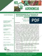 Micronutrientes en La Fisiología de Las Plantas