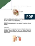 Anatomia Tutoria
