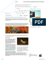 Consejos Básicos Para Fotografiar Aves I y II-Fotografía