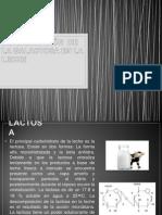 Determinación de La Lactosa en La Leche Terminado