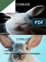 Crianza de conejos