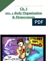 k8thgrade8thgradehumanbodychapter1notes8thgrade Ch 1sec 1bodyorganizationhomeostasis 100110202611 Phpapp02