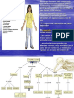 Huesos y Musculos[1]