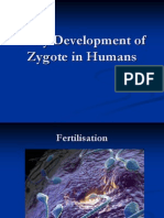 Early Development of Zygote in Humans