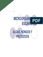 (Microsoft PowerPoint - Algas,Hongos Protozoos
