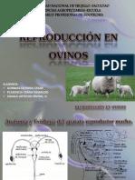 Reproduccion en Ovinos
