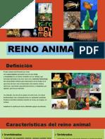 reino animal exposicion.pptx