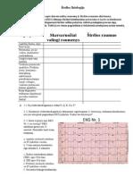 Širdies fiziologija
