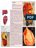 Lp 15 Vascularizatia Cordului Pericardul
