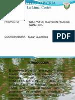 presentacinproyectotilapia-110617174026-phpapp01