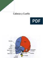 Cabeza y Cuellopaolo