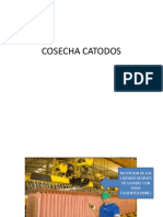 COSECHA CATODOS