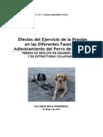 166321342 Efectos Del Ejercicio Presion Diferentes Fases Del Adiestramiento Del Perro Rescate