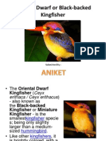 OrientalOriental Dwarf Dwarf or Black-backed Kingfisher