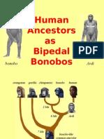 Human Ancestors as Bipedal Bonobos