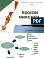 Prepa Region Braquial