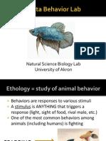 Lab 2 Animal Behavior Bettas