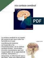 Anatomia Corteza Cerebral