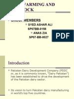 Dairy Pakistan Stu