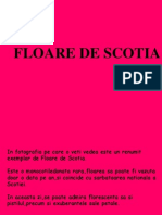 Floare de Scotia r
