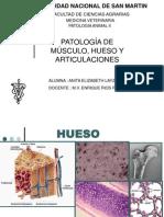 Patologia Del Sistema LOcomotor