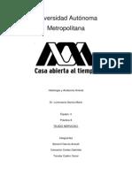 Practica 8 Histologia. Tej, Nervioso (1)